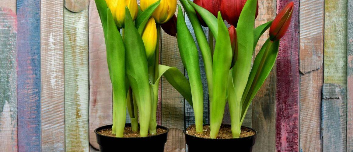 Sztuczne kwiaty w doniczce jak żywe - jak to możliwe?